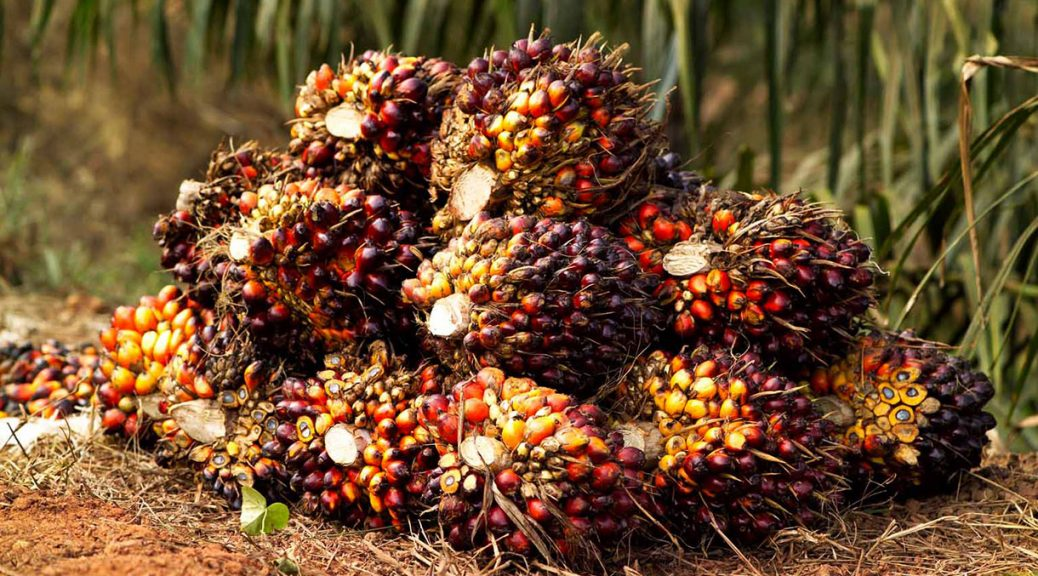 Palm Oil and The Goodness It Brings